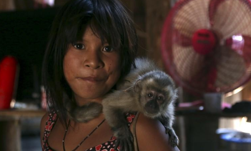 A girl carries a monkey inside her house in their village at Xingu national park in Mato Grosso, Brazil, October 2, 2015. — Reuters