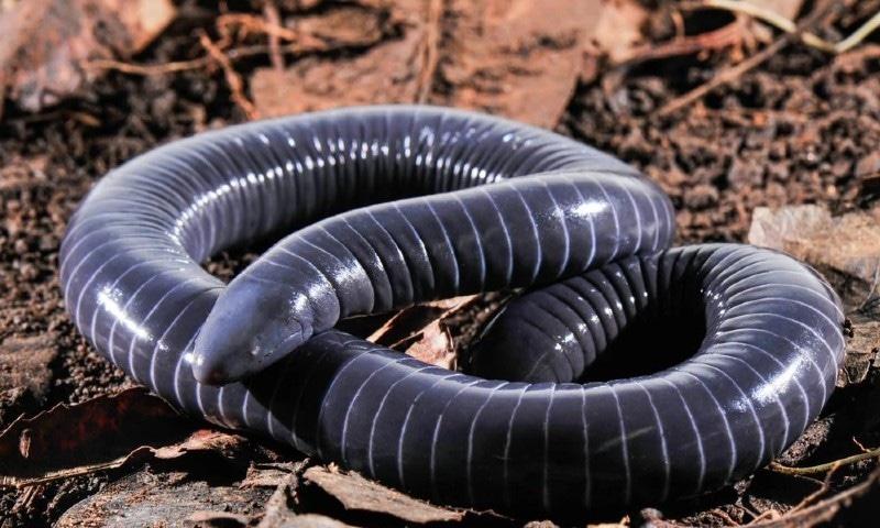 سانپ جیسے زہریلے دانتوں والا انوکھا جاندار دریافت