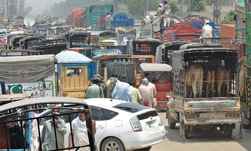 MULTAN Road blocked after traders unloaded their animals on the busy thoroughfare. — White Star / Murtaza Ali