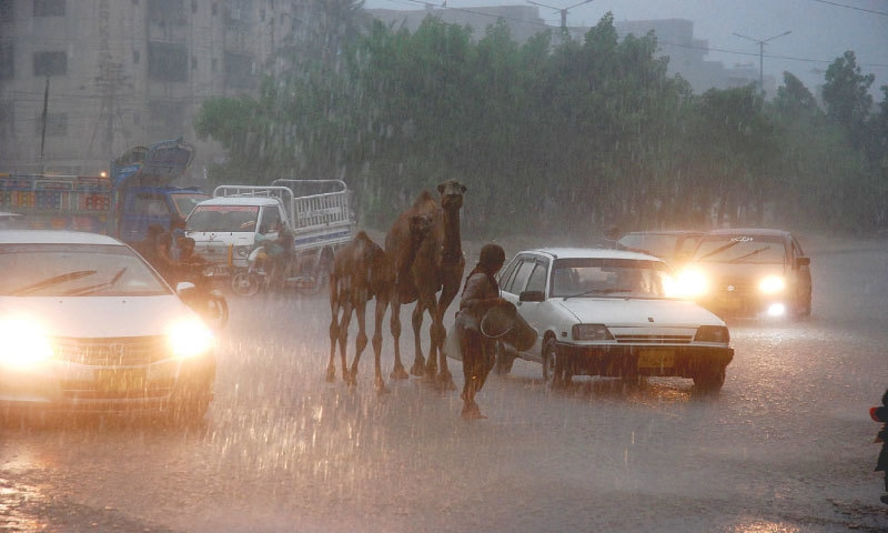 A WOMAN with her camels is trapped on the road in North Karachi during the downpour on Sunday. —Shakil Adil / White Star