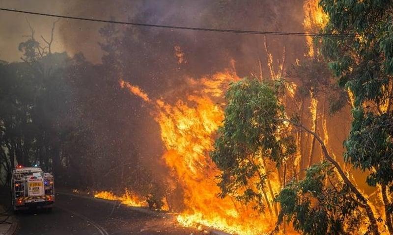 سال 2019 کے آخر اور 20 کے شروع میں آسٹریلیا کے جنگلات میں غیرمعمولی آگ لگی تھی —فائل فوٹو: اے ایف پی