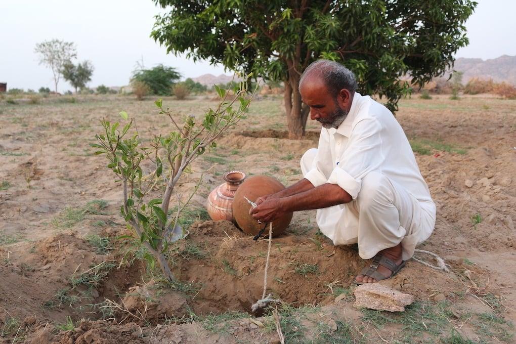 Allahrakhio Khoso, a farmer in the Thar desert, has found a water-efficient way to grow crops. — Zulfiqar Khoso/ The Third Pole