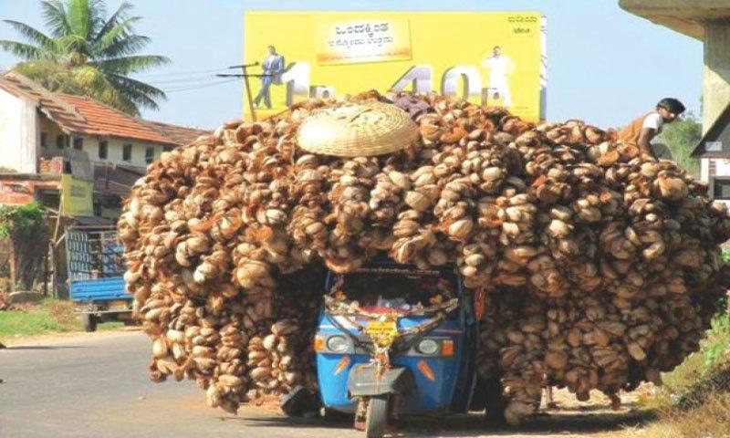 Malinga and a richshaw with Malinga curls
