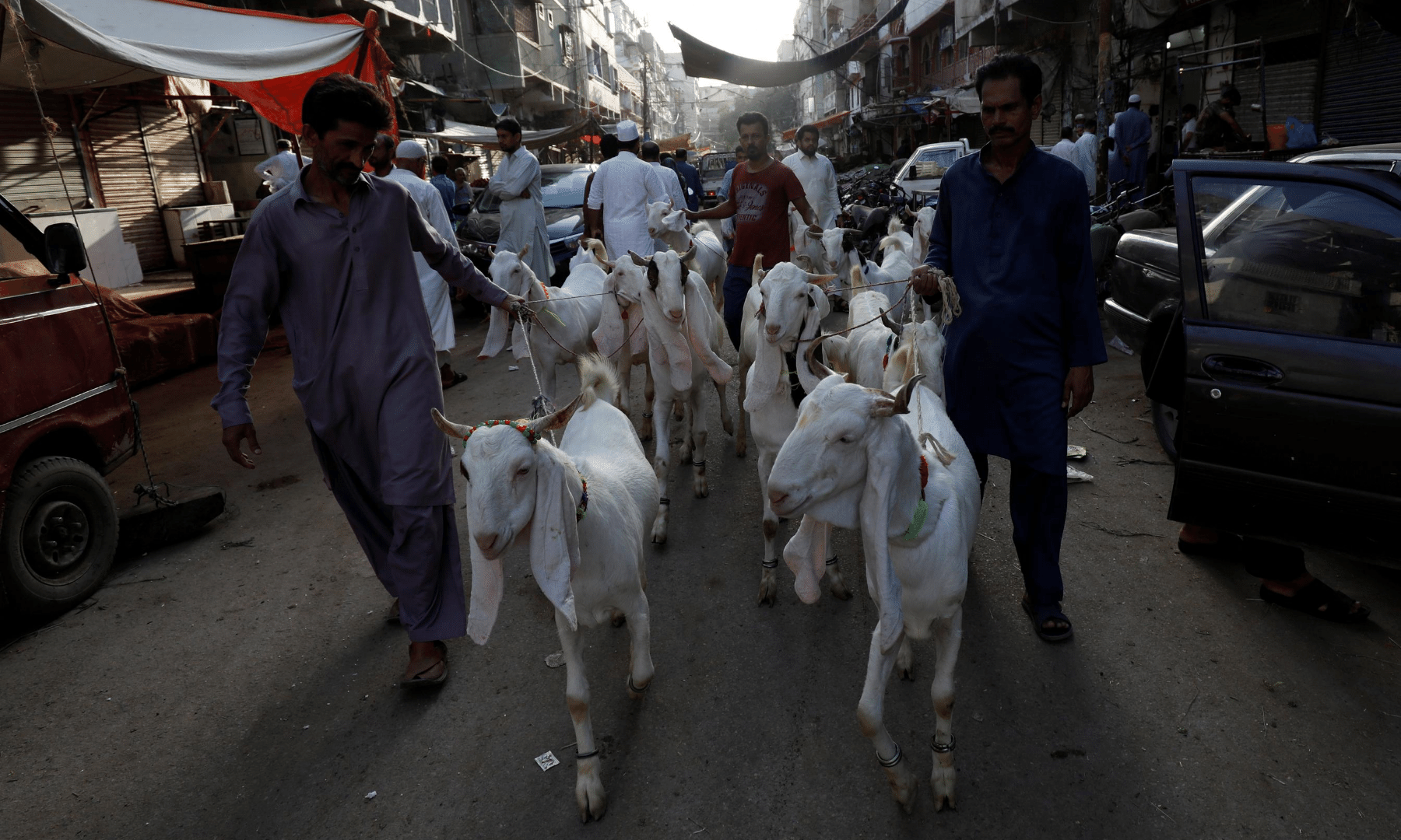 Men lead a pack of goats to be slaughtered in celebration of Eidul Azha in Karachi. — Reuters