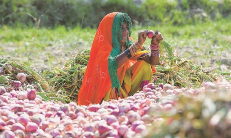 بین الااقوامی تجارتی مرکز نے سندھ اور بلوچستان کے دیہاتوں میں یہ سروے کیا۔ فائل فوٹو: ڈان