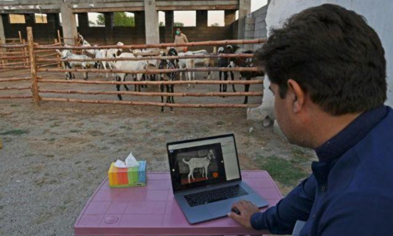 According to a small survey done with the help of the National Incubation Centre in Karachi, more than one-third of the respondents said they wouldn't consider doing online qurbani next year. — AFP/File