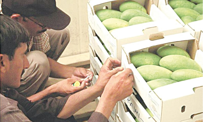 Reduced air freight charges facilitated mango exports in FY20. — Dawn/File