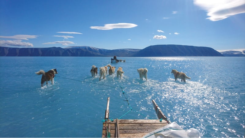 THIS 2019 file photo shows sled dogs wading through water on sea ice during an expedition in North Western Greenland. — AFP