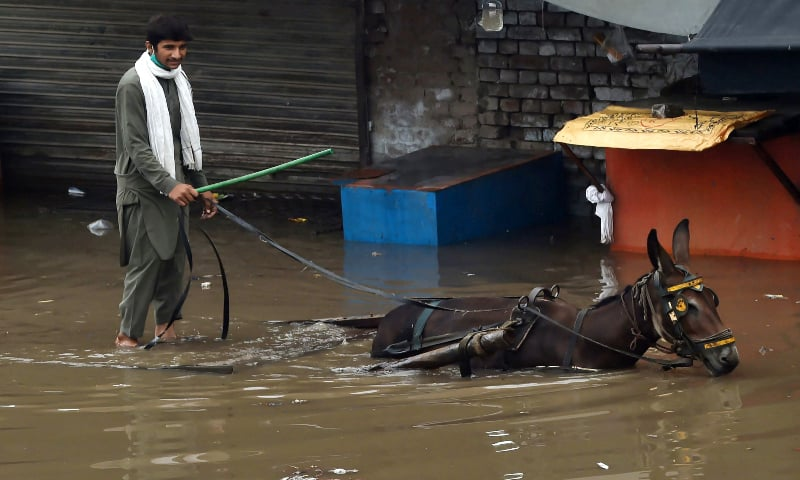 A labourer rides a donkey cart through a flooded street after heavy monsoon rains in Lahore on August 20. — AFP