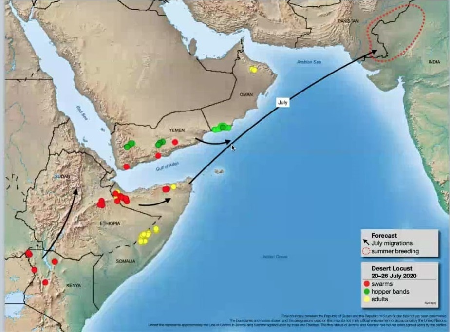 Locust migration from Horn of Africa to South Asia. — Photo courtesy: FAO