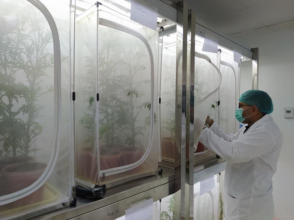 Abdul Rehman in CABI lab in Rawalpindi. — CABI Pakistan