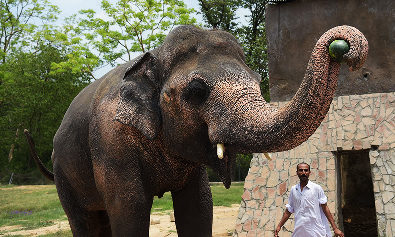 Islamabad zoo dangerous for animals: Austrian experts