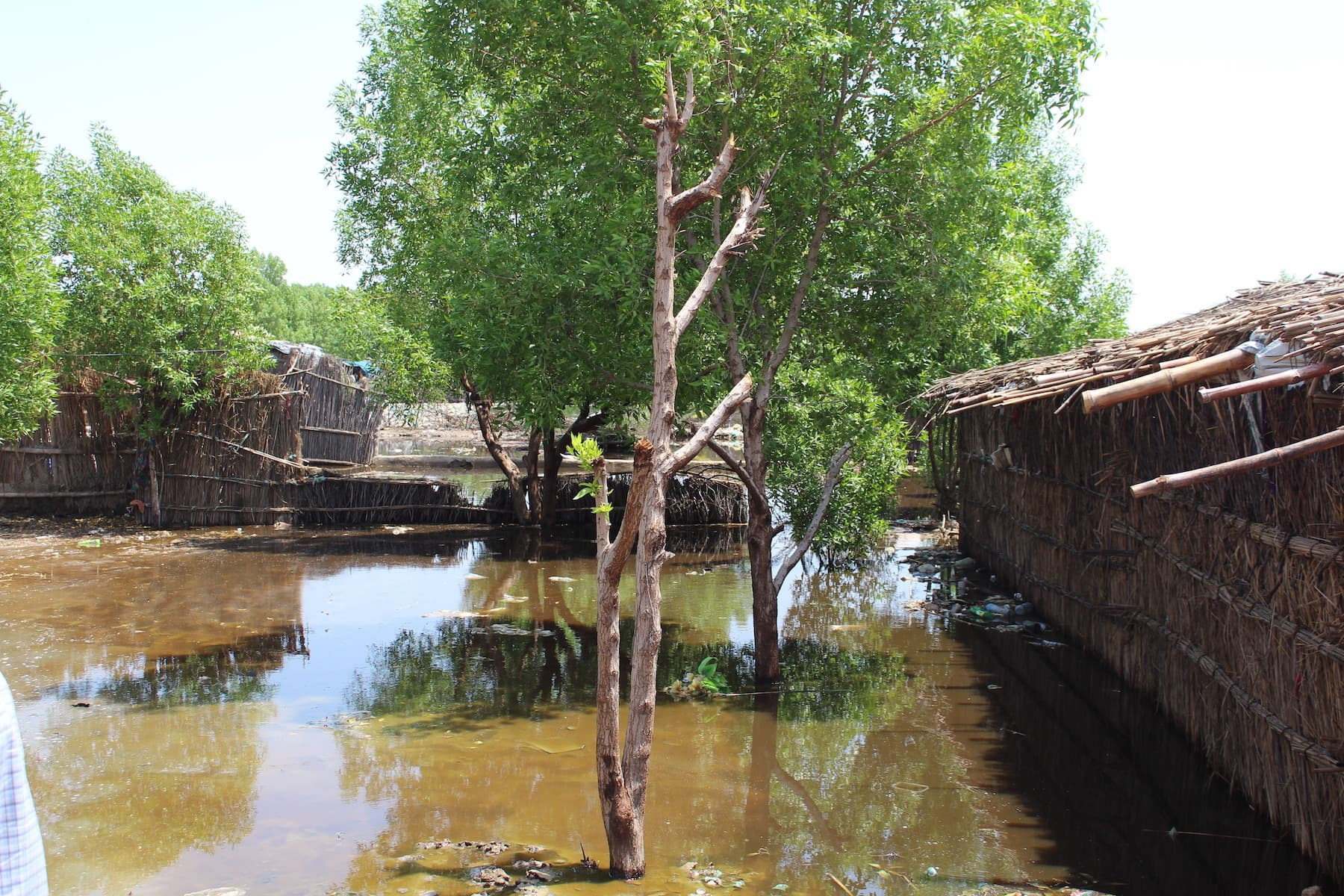 An inundated village in UC-1 of Mirpurkhas city. Hundreds of thousands of people have been forced to abandon their homes and take shelter in make-shift tents on the roads due to the flooding caused by the recent rains. — Photo by author