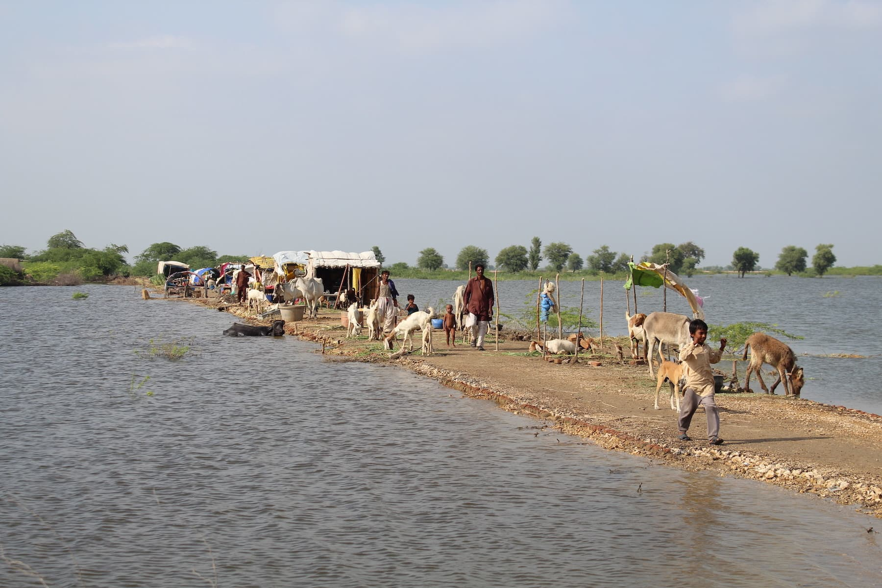Villagers in Sindhri,  Mirpurkhas district, have set up makeshift tents on a dry stretch of land surrounded by miles of inundated fields. Large swathes of land have been inundated by rain water, forcing hundreds of thousands of people to abandon their homes. — Photo by author