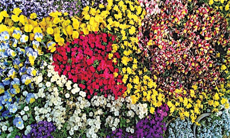 Mixed flower bed | Photos by the writer