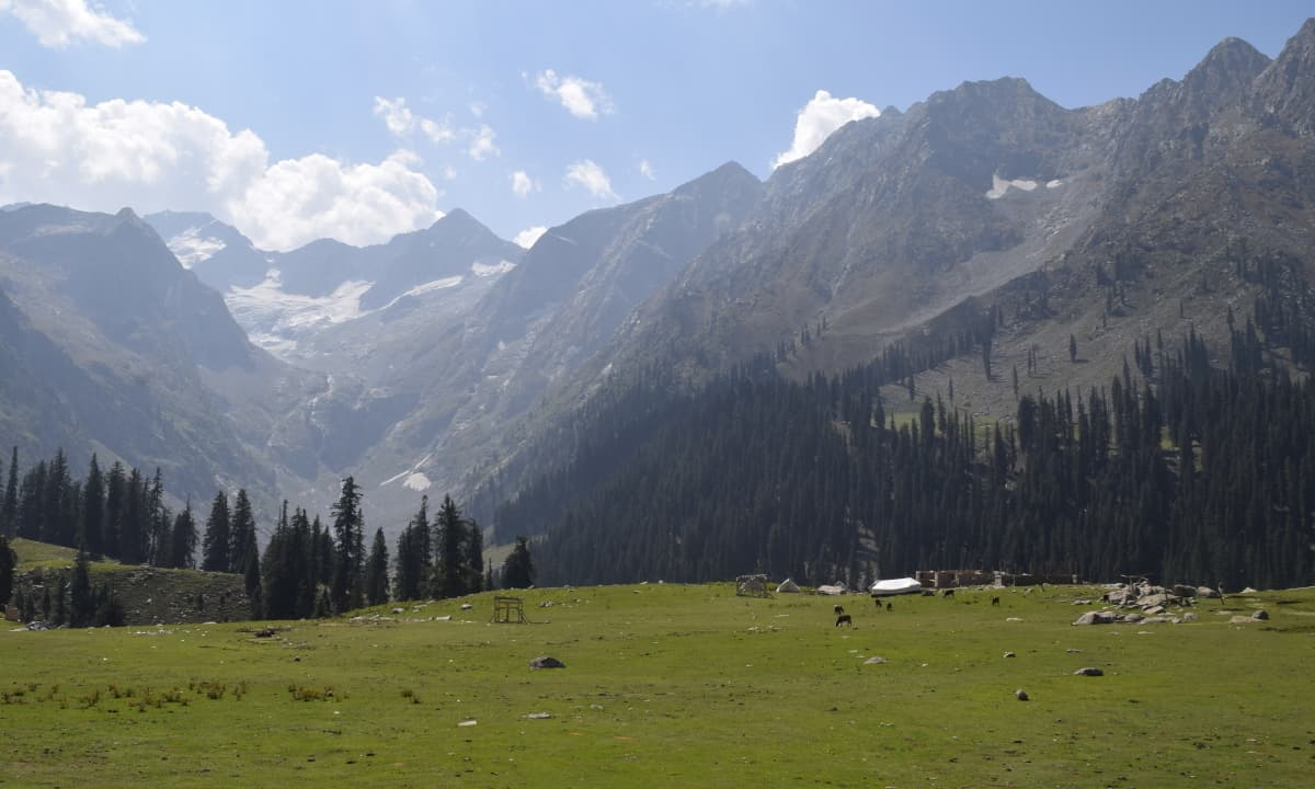 The meadows are surrounded by snowy mountains and thick pine forests.