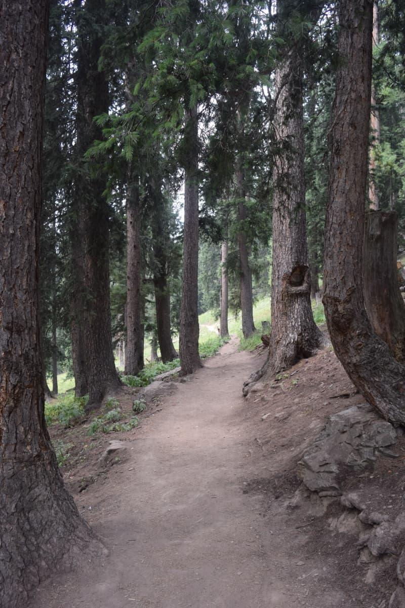 The walk to reach the Jahaz Banda meadows.
