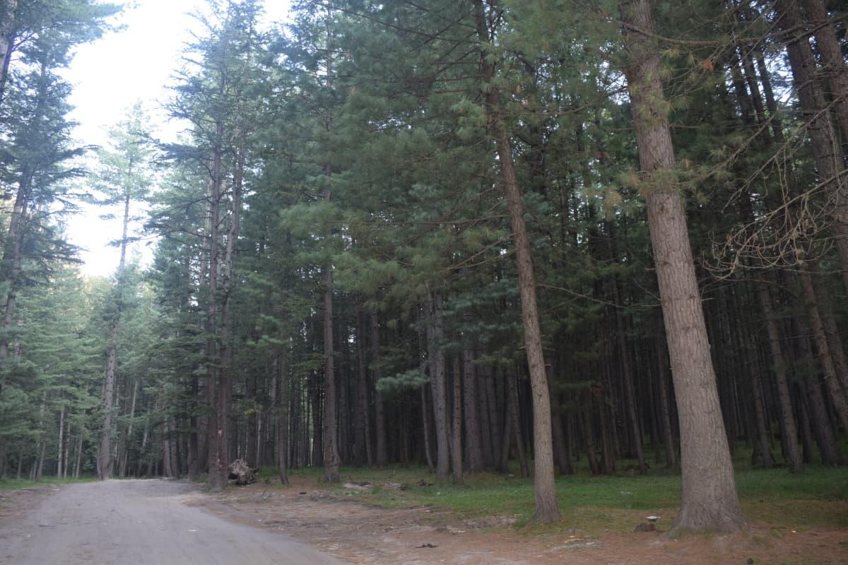 Driving through miles of Kumrat woods.
