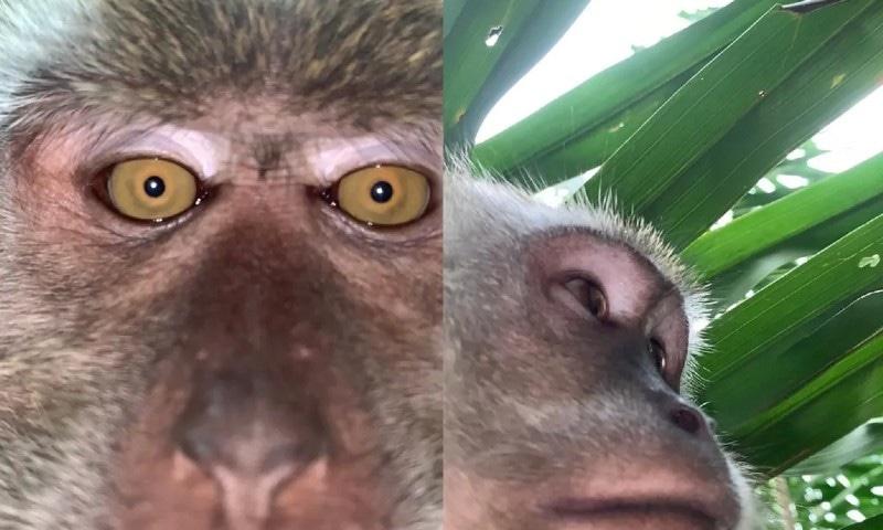 جب ایک بندر نے اسمارٹ فون چرا کر سیلفیز لیں