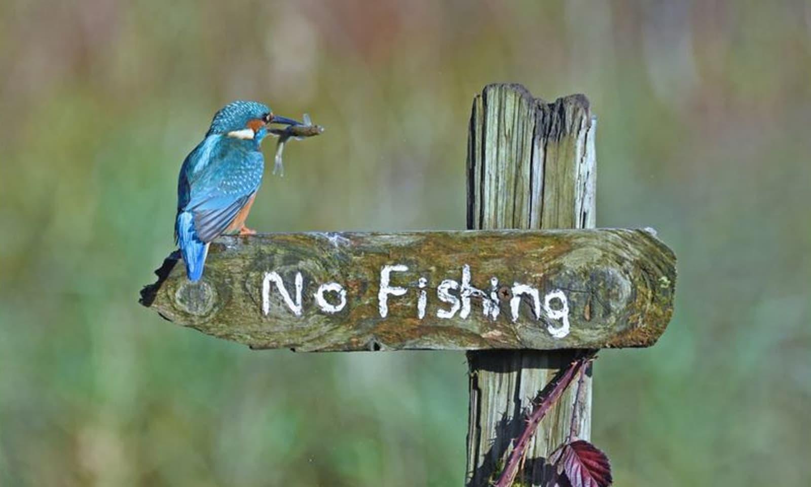اسکاٹ لینڈ میں ایک پرندہ مچھلی کے شکار نہ کرنے کی تنبیہ کا مذاق اڑاتے ہوئے—فوٹو:سیلی جونز/کامیڈی وائلڈ لائف فوٹوگرافی