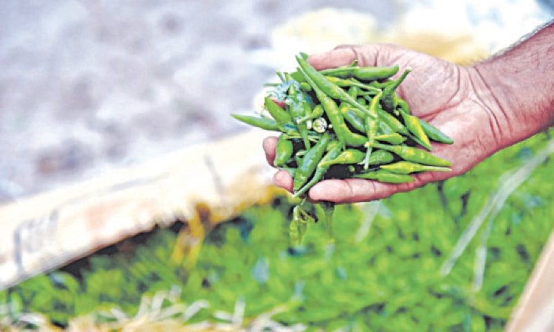Capsicum was available at Rs180-200 per while green chilly was tagged at Rs200-240 per kg.