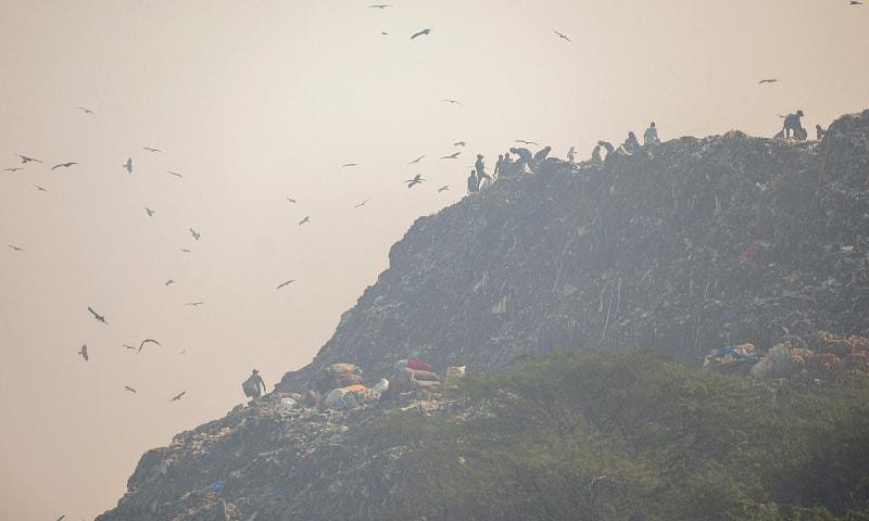 Delhi chokes on 'severe' smog as farm fires soar