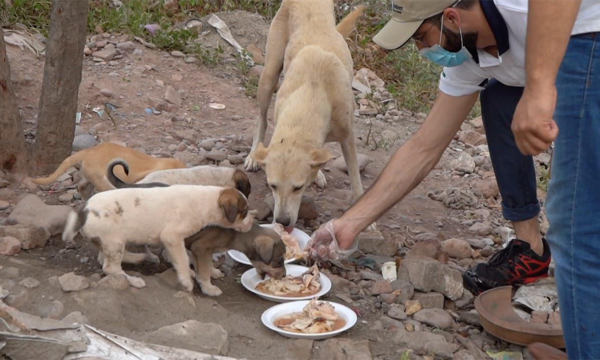 اس سرگرمی سے رضاکاروں کو کتوں کی نفسیات کو سمجھنے کا بھی موقع ملا