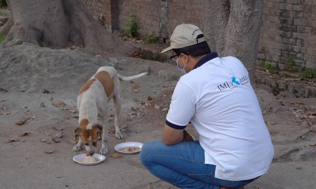 ماڈرن علاقوں کے کتوں کی نفسیات بھی دیگر کتوں سے مختلف ہوتی ہے