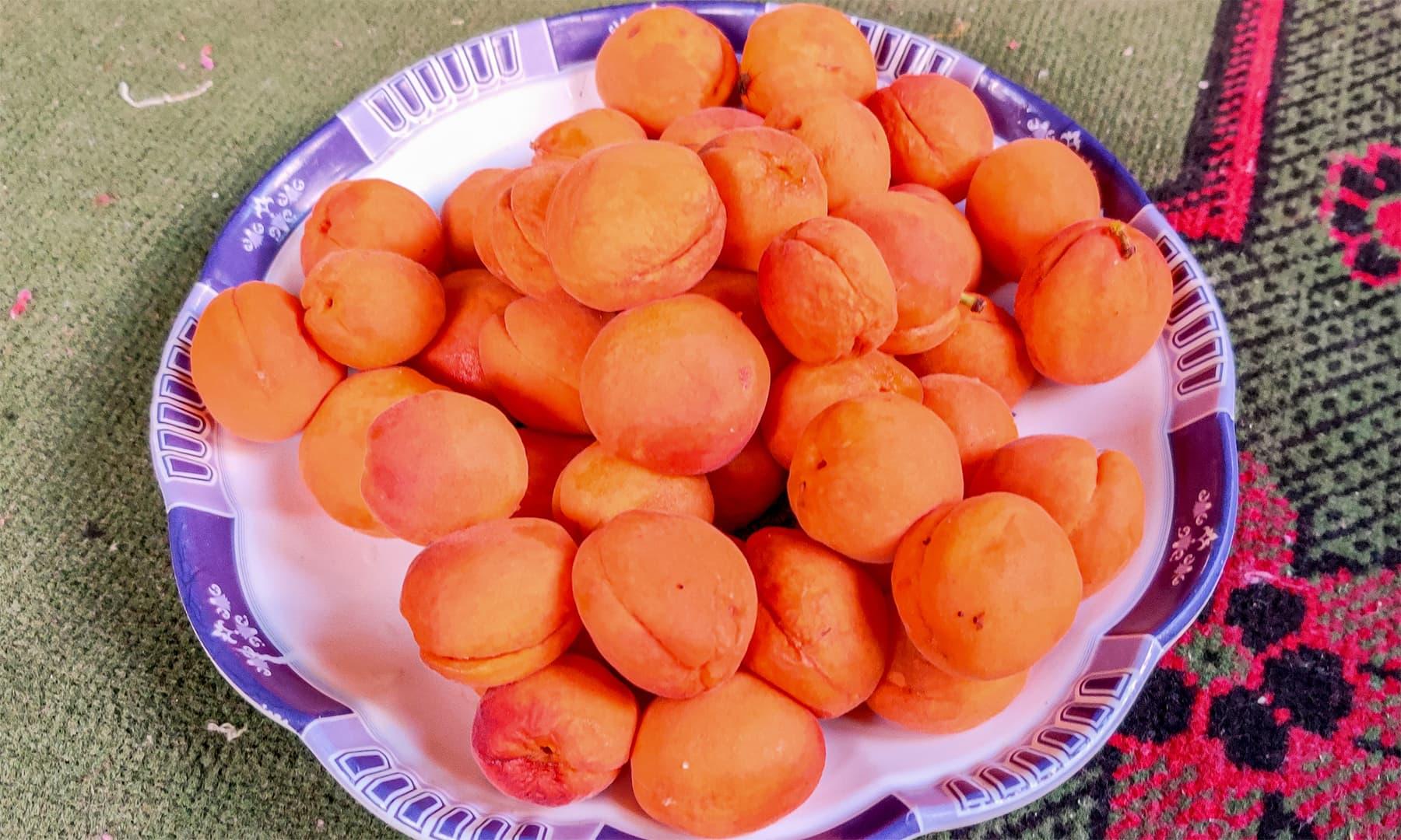 اگر بلتستان میں ہلمان خوبانی نہیں کھائی تو سمجھ لیں کہ کچھ نہیں کھایا
