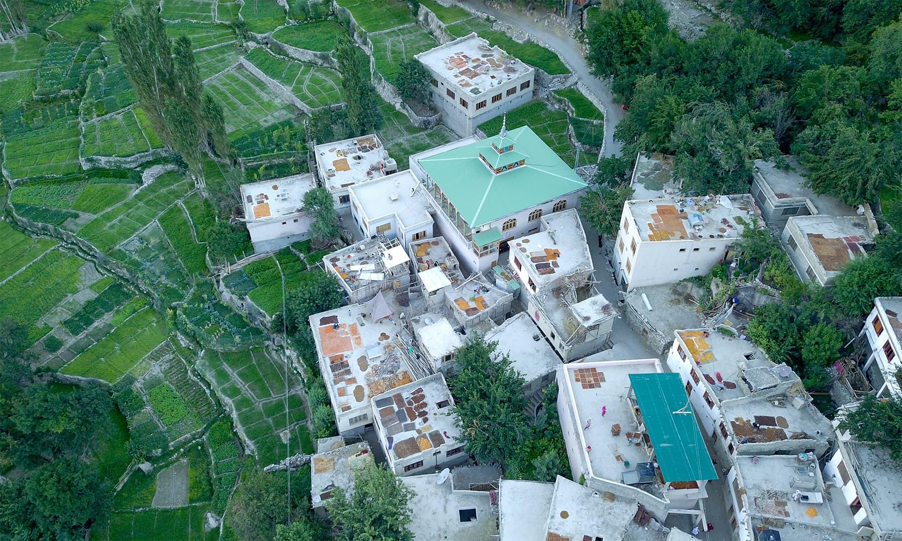 گھروں کی چھتوں پر میٹھی خوبانی کو سکھا کر شدید سردیوں میں استعمال کیا جاتا ہے
