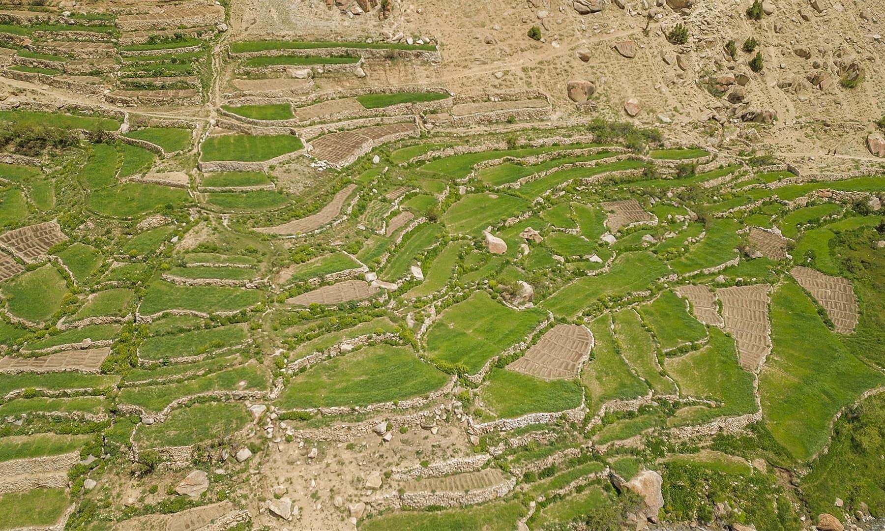 بلتستان میں فصل اگانے کا منفرد انداز