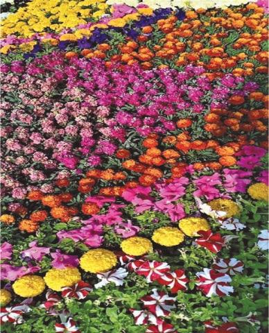 A mass of seasonal flowers