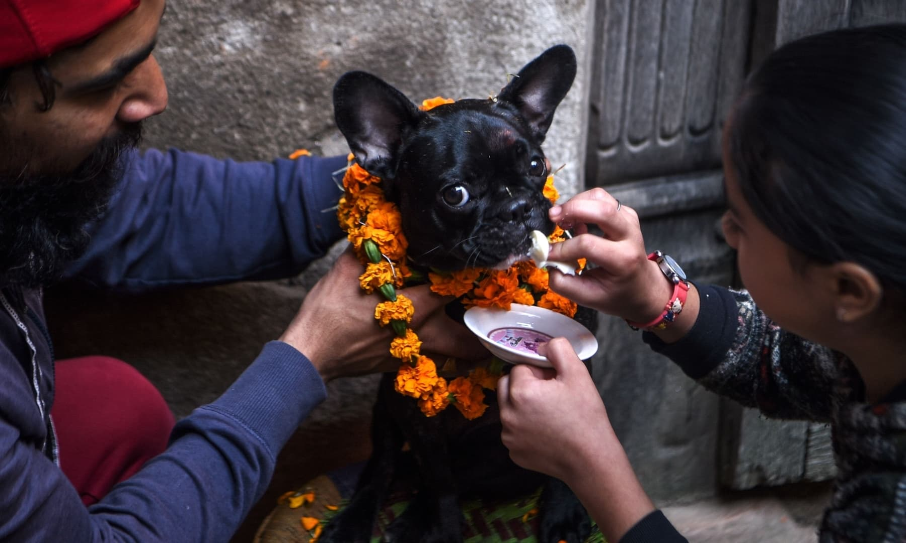 Hindu devotees worship a dog as part of offerings for Tihar which is the local name for Diwali at a dog care centre in Kathmandu, Nepal. — AFP