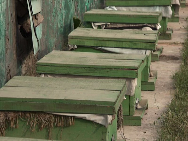 شیر زمان کے پاس مکھیاں پالنے کے 2 ہزار بکسے موجود ہیں تاہم ان کی ہزاروں مکھیاں ضائع ہوگئی ہیں