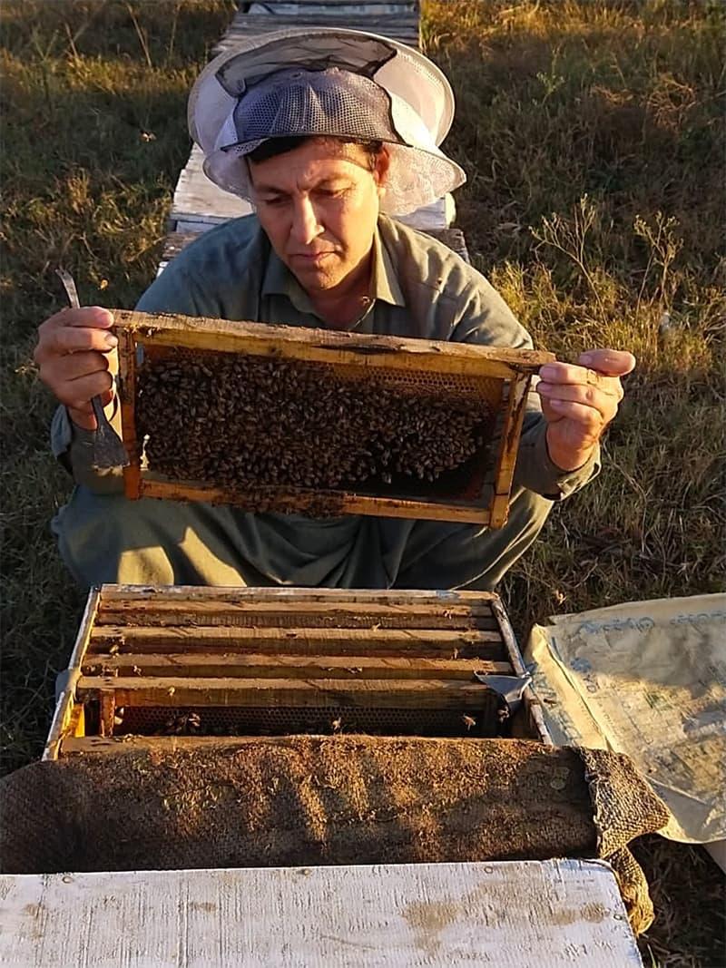 کورونا کے سبب مکھیوں کو ادویات بروقت نہ ملنے کی وجہ سے ہزاروں مکھیاں ضائع ہوگئیں