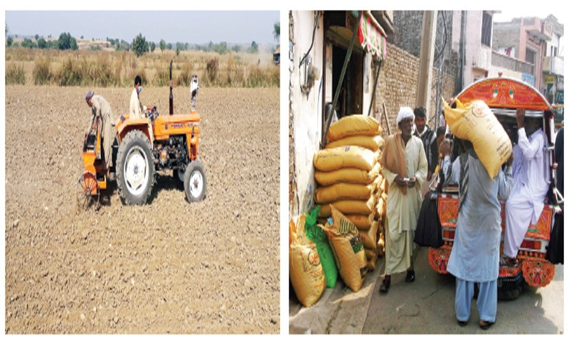 Farmers cultivate wheat some 10km away from Chakwal. The other picture shows villagers buying fertilisers. — Dawn