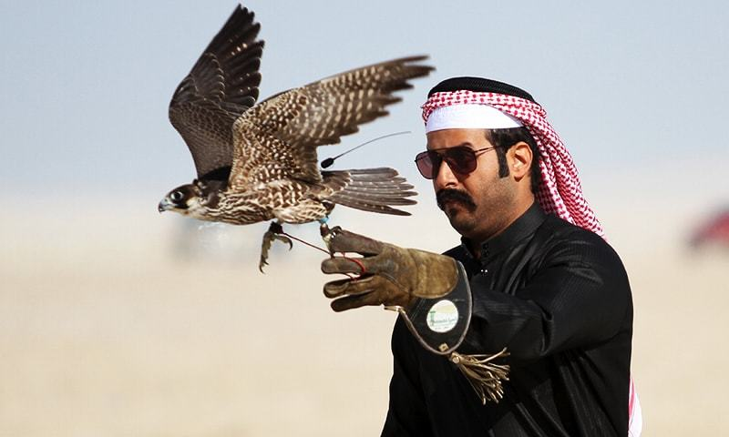 This file photo shows a  man releasing his falcon during a falcon contest at Qatar International Falcons and Hunting Festival at Sealine desert, Qatar. — Reuters