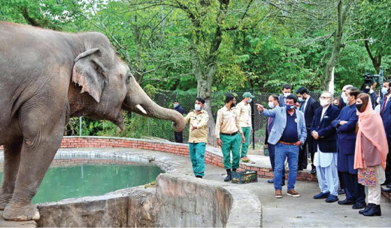 President Dr Arif Alvi and first lady visit Marghzar Zoo to say goodbye to Kaavan on Tuesday. — APP