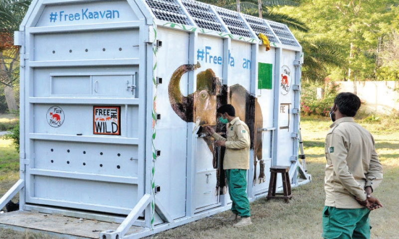 An IWMB official paints an image of Kavaan on the crate in which the elephant will be shifted to Cambodia. — White Star