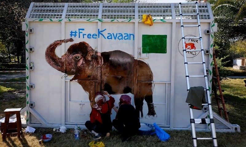 """Volunteers paint an image of an elephant named """"Kaavan """"on a crate to be used to be transported Kaavan to a sanctuary in Cambodia. — AP"""