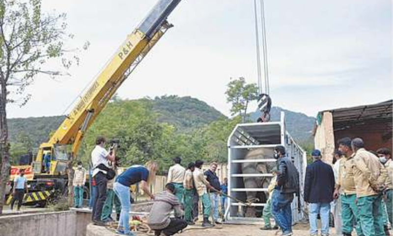 A crane lifting the cage carrying Kaavan before a truck took it to the airport for transportation to Cambodia. — APP