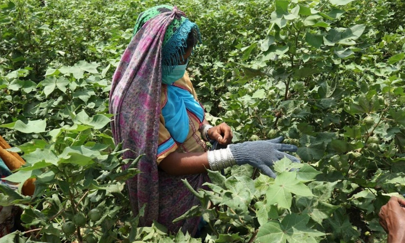 The Ghotki area is witnessing a major shift in the agriculture sector over the years to set new rural economic trends.— Photo courtesy: CABI/File