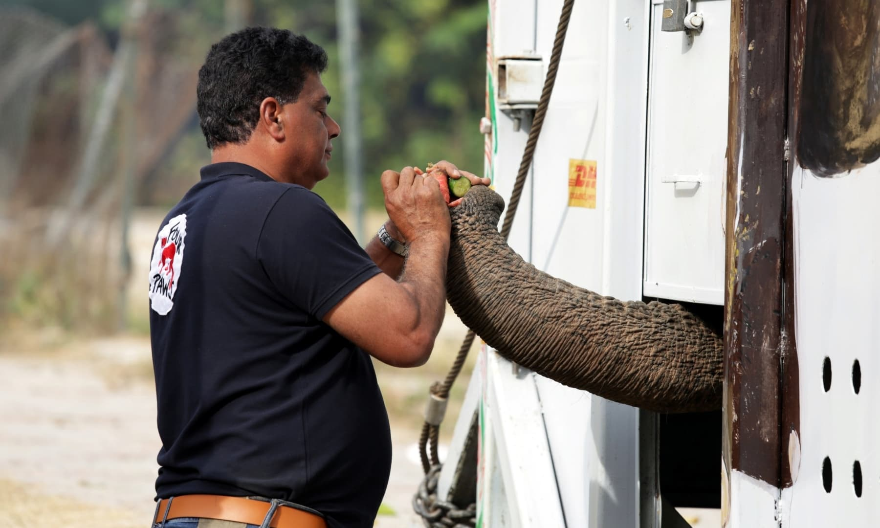 Amir Khalil, head of project development at Four Paws International, feeds Kaavan at the Marghazar Zoo in Islamabad, November 29. — Reuters
