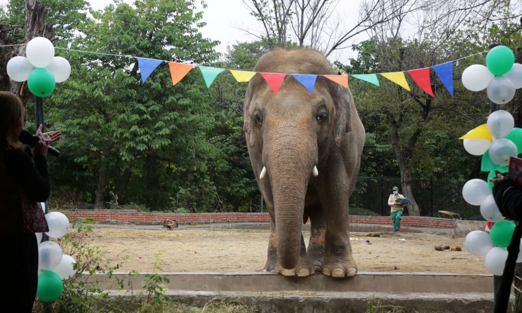 Kaavan, an elephant waiting to be transported to a sanctuary in Cambodia, is seen during a farewell ceremony at the Marghazar Zoo in Islamabad, November 23. — Reuters