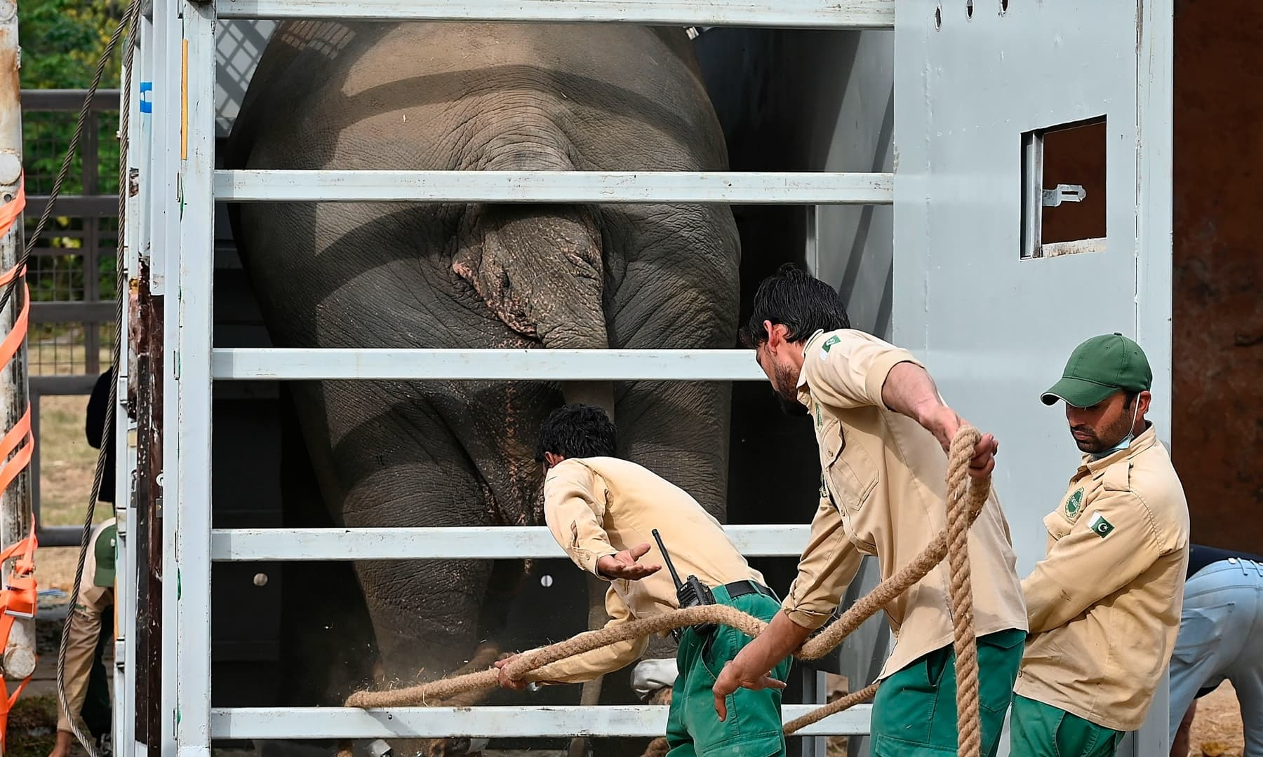 Officials of Four Paws International and wildlife rangers move Kaavan into a crate prior to its transportation to a sanctuary in Cambodia, at the Marghazar Zoo in Islamabad on November 29. — AFP