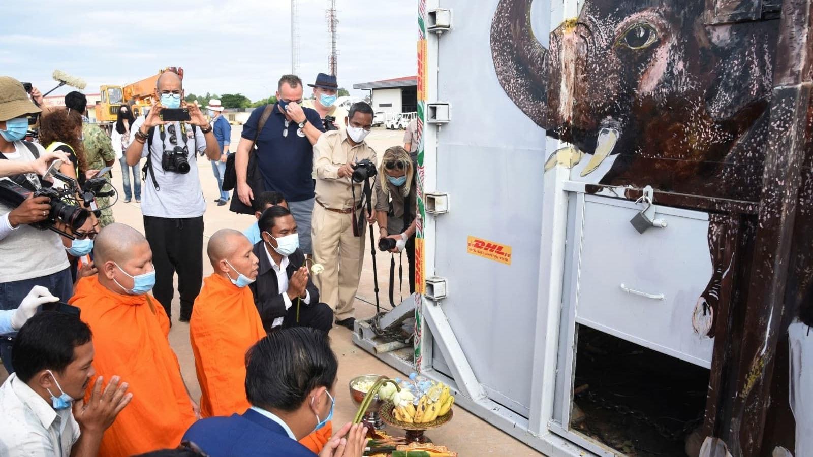 تنہا ترین ہاتھی قرار دیا جانے والا 'کاون' کمبوڈیا پہنچ گیا —فوٹو: اے پی