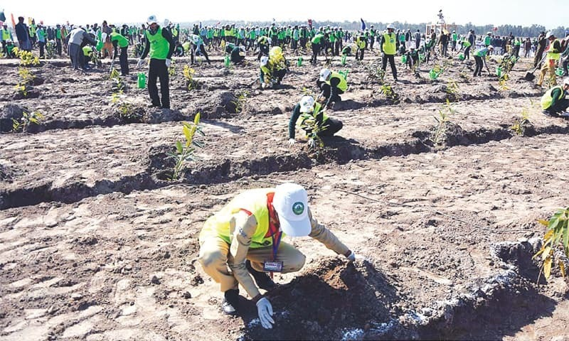 In this 2019 file photo, schoolchildren plant saplings in connection with the 10 billion trees tsunami project at Baloki Nature Reserve Project. — APP/File