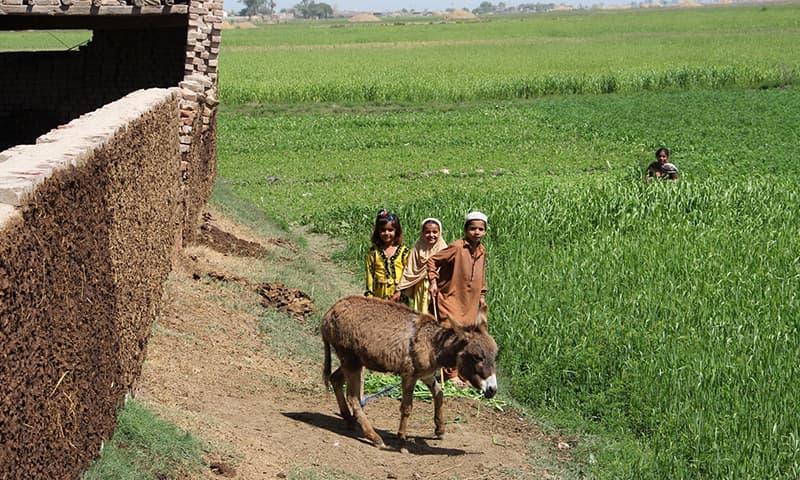 جیکب آباد میں ہمارے گاؤں کا ایک منظر