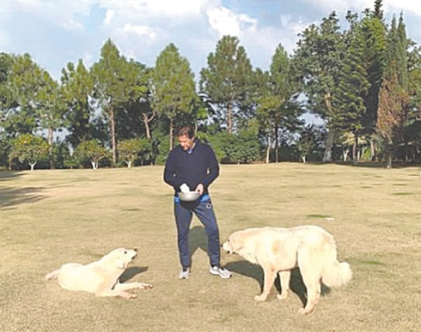 ISLAMABAD: Prime Minister Imran Khan feeding his pet dogs at his Banigala residence on Sunday.—PTI Official Instagram