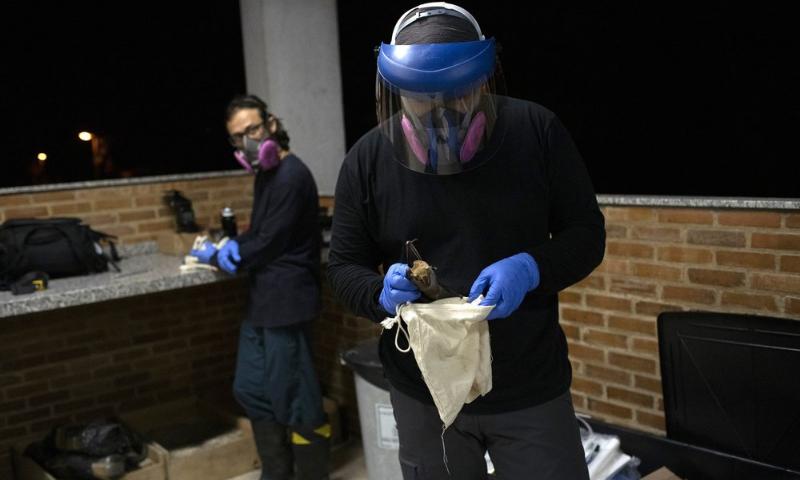 A researcher for Brazil's state-run Fiocruz Institute places into a cloth bag a bat captured in the Atlantic Forest at Pedra Branca state park, near Rio de Janeiro on Nov 17. — AP